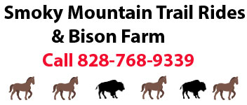 Smoky Mountain Trail Rides
